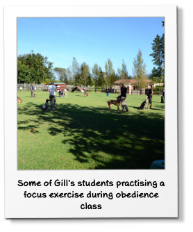 Some of Gill's students practising a focus exercise during obedience class